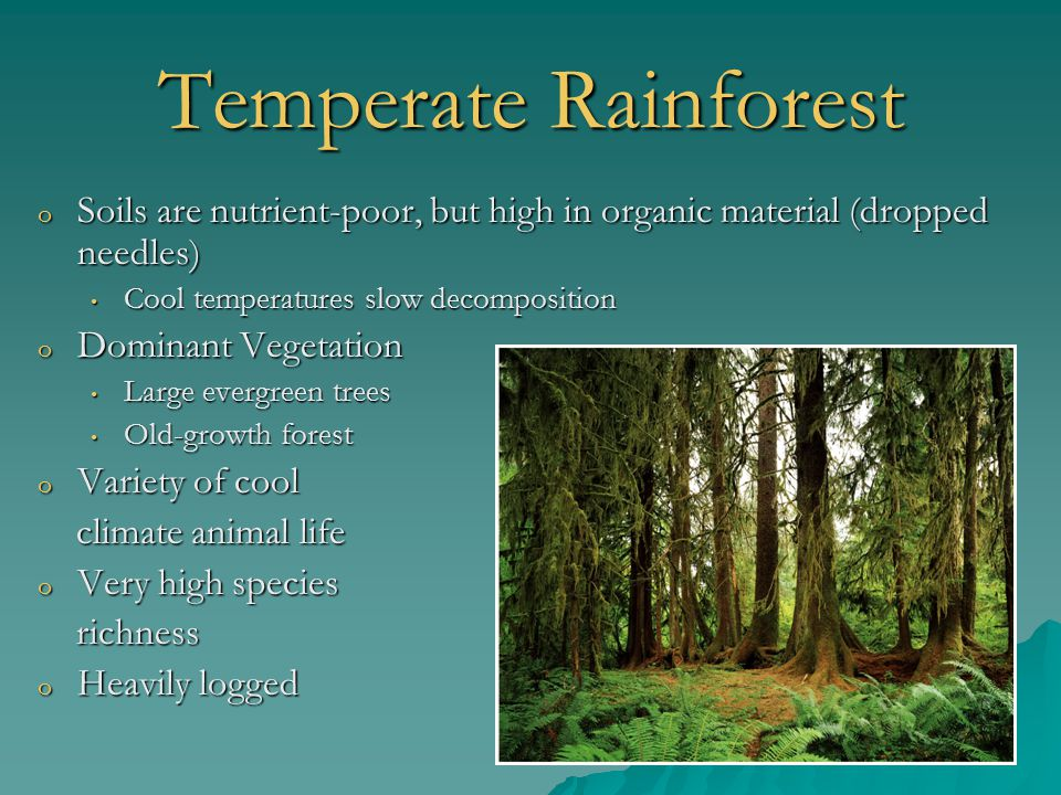 Temperate Rainforest o Soils are nutrient-poor, but high in organic material (dropped needles) Cool temperatures slow decomposition Cool temperatures