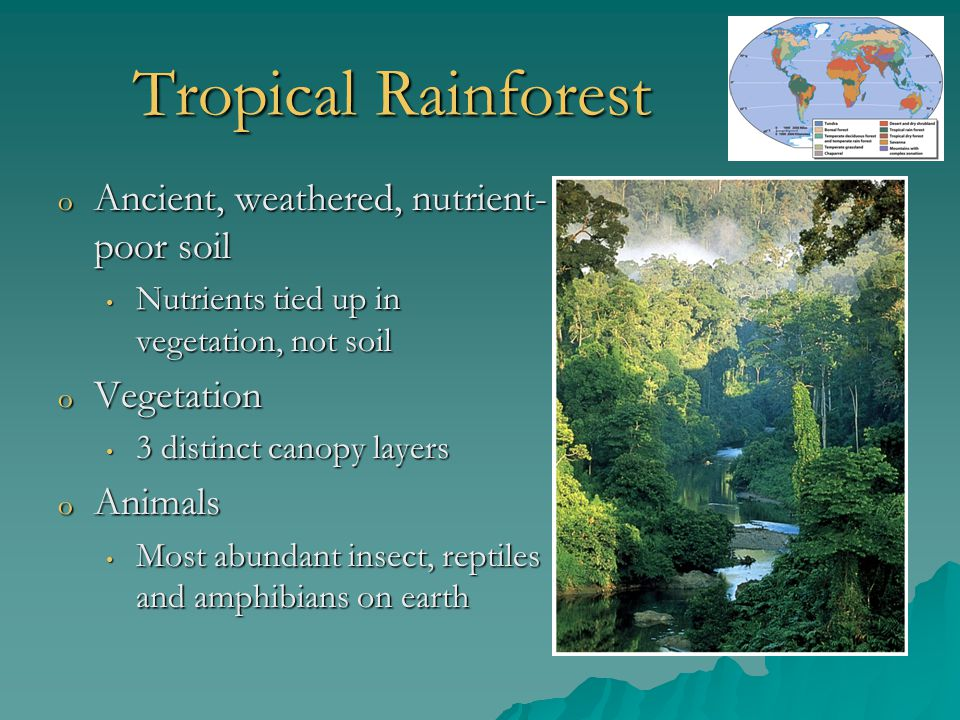 Tropical Rainforest o Ancient, weathered, nutrient- poor soil Nutrients tied up in vegetation, not soil Nutrients tied up in vegetation, not soil o Ve