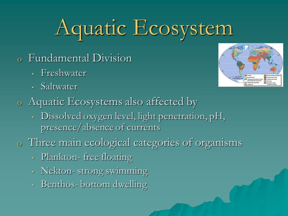 Aquatic Ecosystem o Fundamental Division Freshwater Freshwater Saltwater Saltwater o Aquatic Ecosystems also affected by Dissolved oxygen level, light