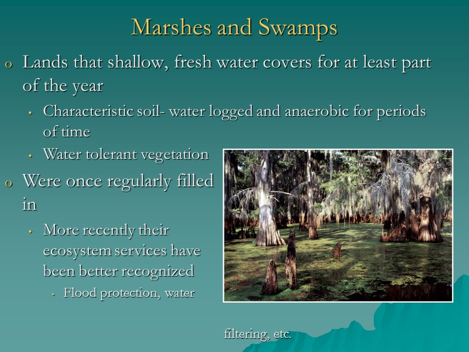 Marshes and Swamps o Lands that shallow, fresh water covers for at least part of the year Characteristic soil- water logged and anaerobic for periods