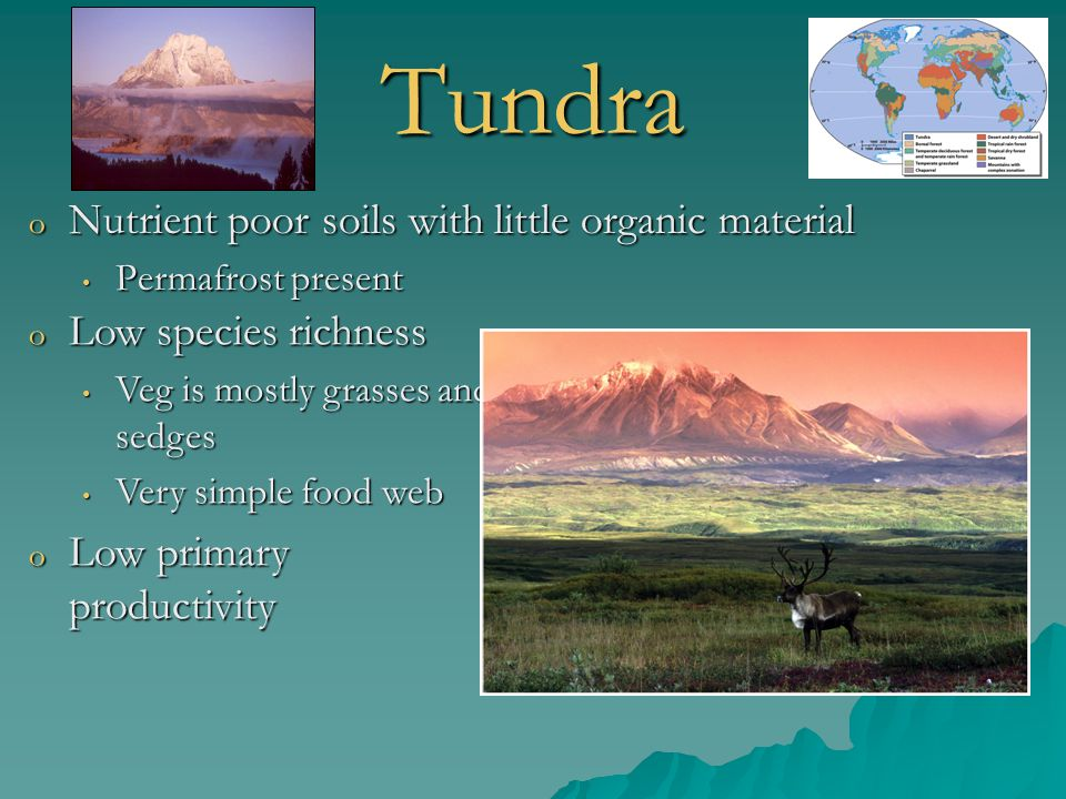 Tundra o Nutrient poor soils with little organic material Permafrost present Permafrost present o Low species richness Veg is mostly grasses and sedge