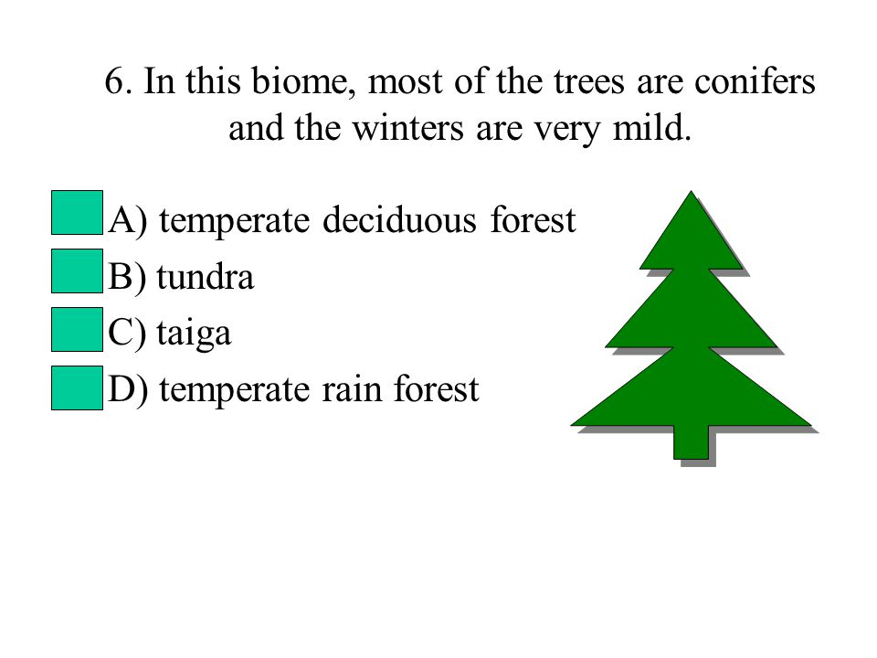 6. In this biome, most of the trees are conifers and the winters are very mild.