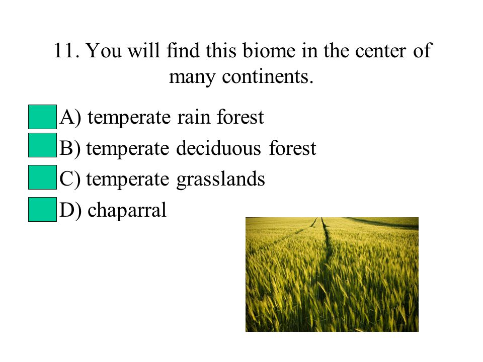 11. You will find this biome in the center of many continents. A) temperate rain forest B) temperate deciduous forest C) temperate grasslands D) chapa