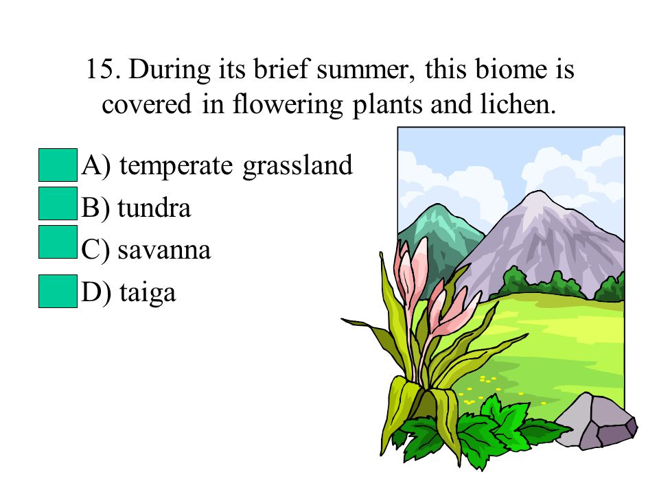 15. During its brief summer, this biome is covered in flowering plants and lichen. A) temperate grassland B) tundra C) savanna D) taiga