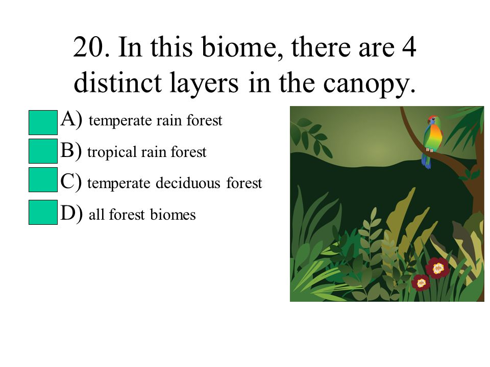 20. In this biome, there are 4 distinct layers in the canopy. A) temperate rain forest B) tropical rain forest C) temperate deciduous forest D) all fo