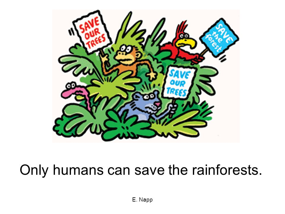 E. Napp Only humans can save the rainforests.