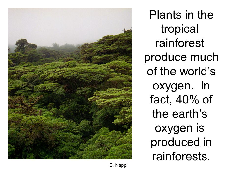 E.Napp Let's Learn More About Rainforests. It's your turn.