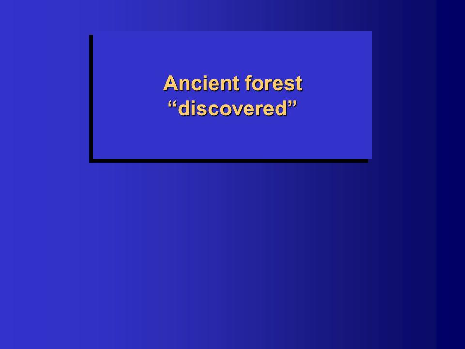 "Ancient forest ""discovered"""