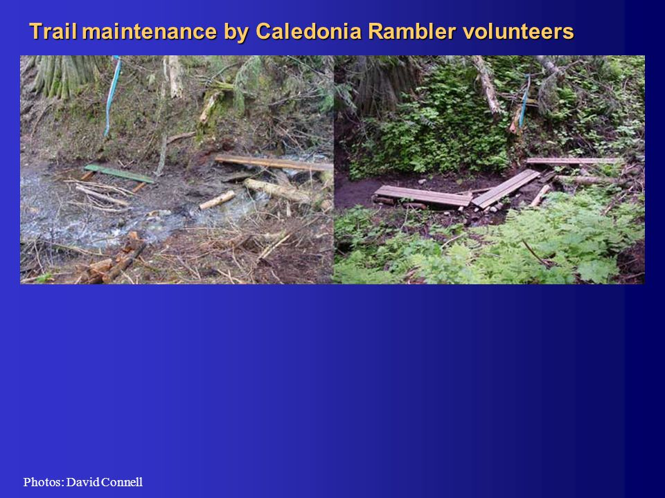 Trail maintenance by Caledonia Rambler volunteers Photos: David Connell