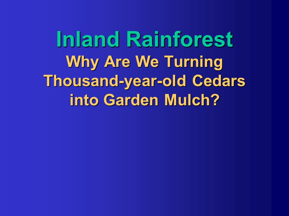 Inland Rainforest Why Are We Turning Thousand-year-old Cedars into Garden Mulch?