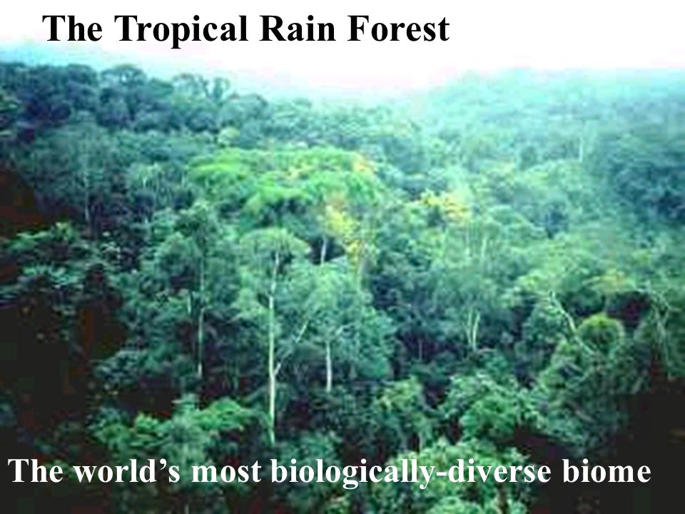 The Tropical Rain Forest The world's most biologically-diverse biome