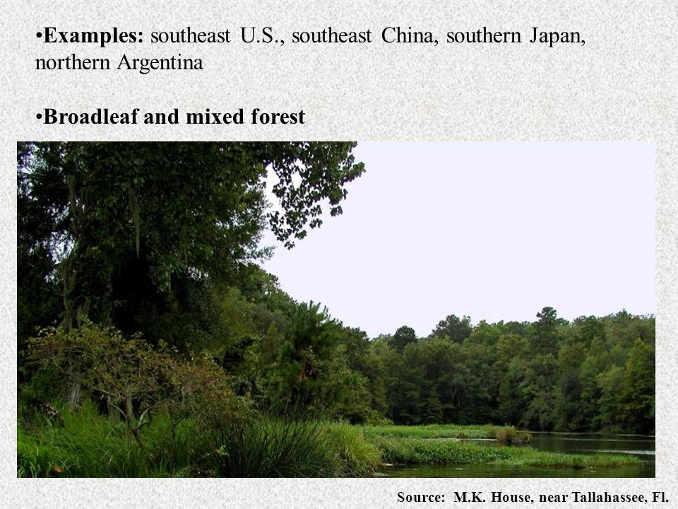 Examples: southeast U.S., southeast China, southern Japan, northern Argentina Broadleaf and mixed forest Source: M.K. House, near Tallahassee, Fl.
