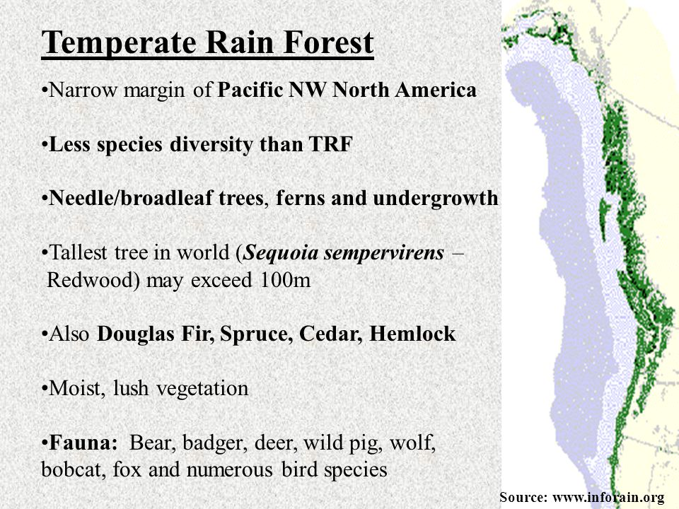 Temperate Rain Forest Narrow margin of Pacific NW North America Less species diversity than TRF Needle/broadleaf trees, ferns and undergrowth Tallest