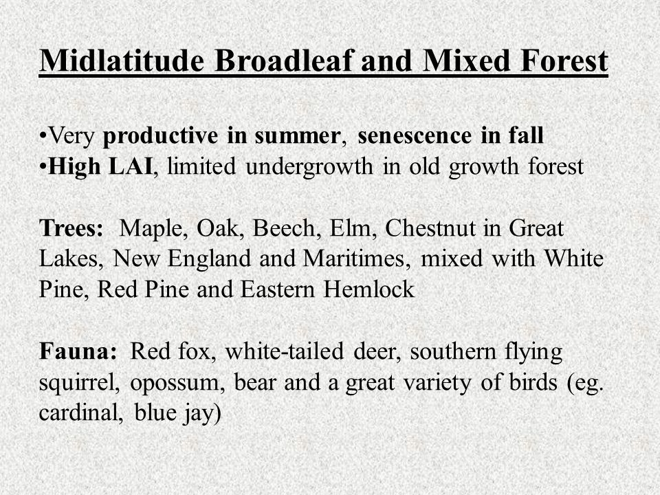 Midlatitude Broadleaf and Mixed Forest Very productive in summer, senescence in fall High LAI, limited undergrowth in old growth forest Trees: Maple,
