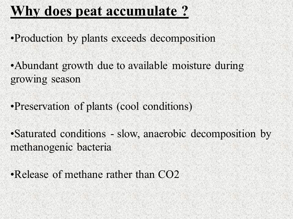 Why does peat accumulate ? Production by plants exceeds decomposition Abundant growth due to available moisture during growing season Preservation of
