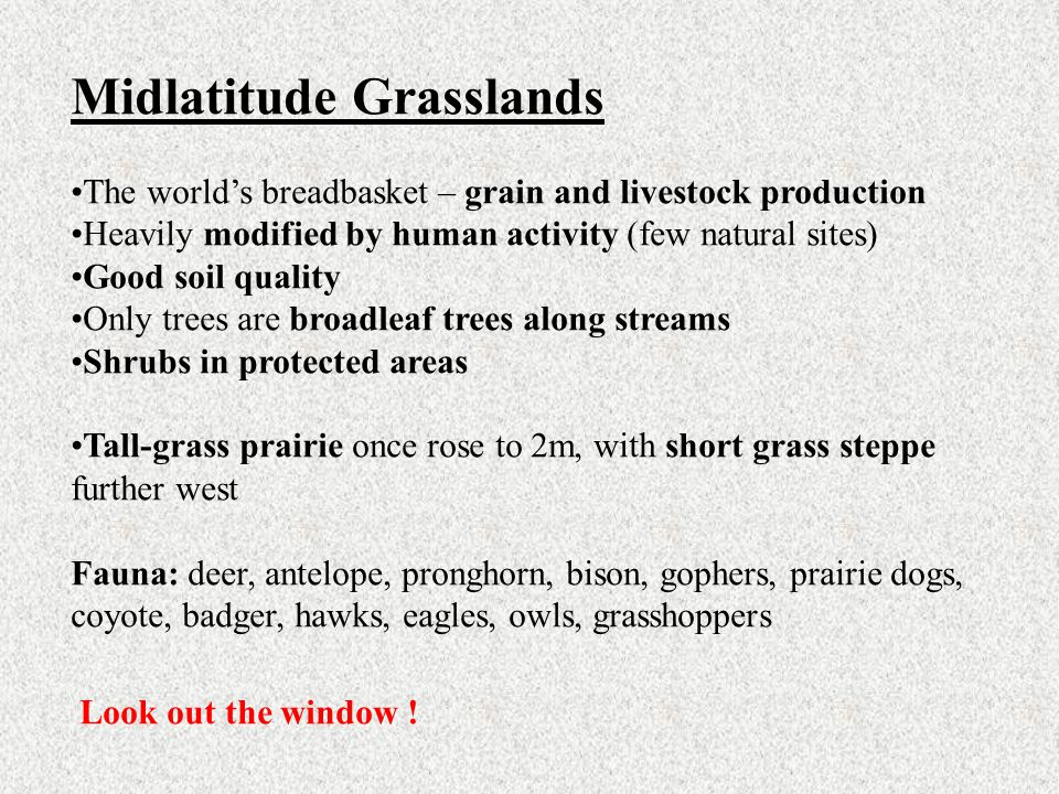 Midlatitude Grasslands The world's breadbasket – grain and livestock production Heavily modified by human activity (few natural sites) Good soil quali