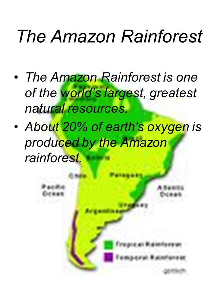 The Amazon Rainforest is one of the world's largest, greatest natural resources.