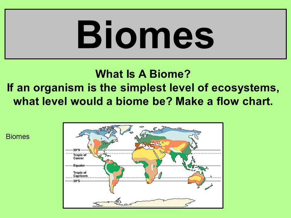 Biomes What Is A Biome? If an organism is the simplest level of ecosystems, what level would a biome be? Make a flow chart. Biomes