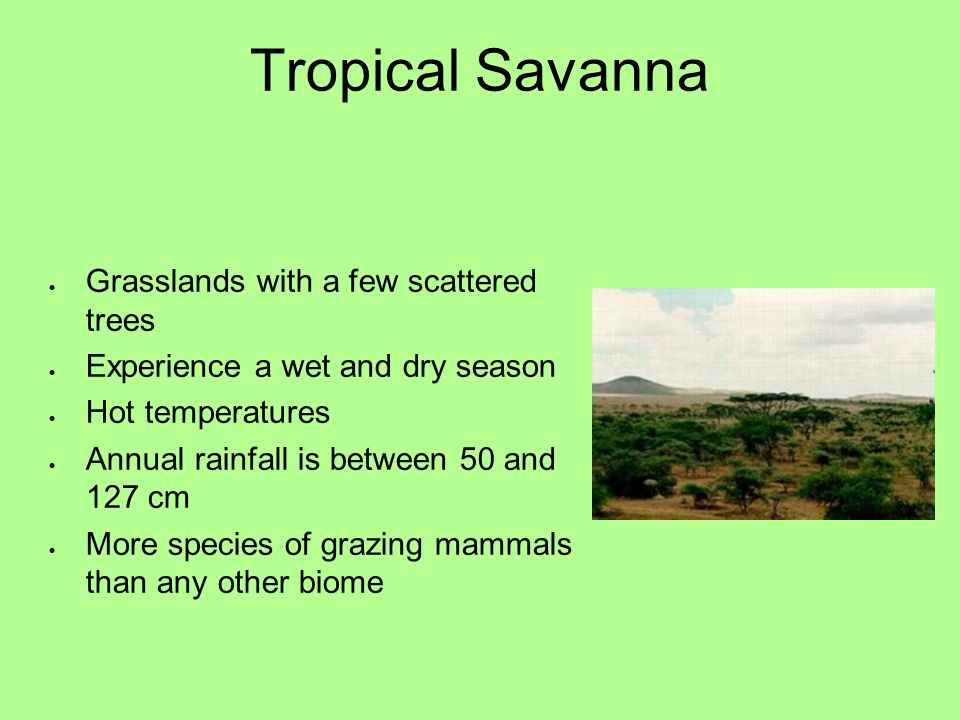 Tropical Savanna  Grasslands with a few scattered trees  Experience a wet and dry season  Hot temperatures  Annual rainfall is between 50 and 127