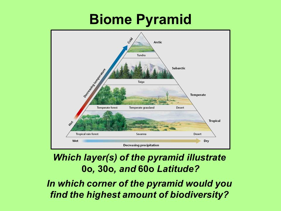 Biome Pyramid Which layer(s) of the pyramid illustrate 0o, 30o, and 60o Latitude? In which corner of the pyramid would you find the highest amount of