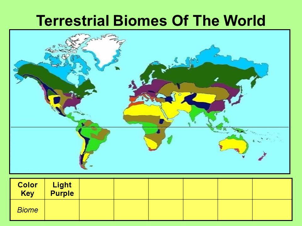 Terrestrial Biomes Of The World Color Key Light Purple Yellow Light Green Brown Light Blue Dark Green Dark Blue Biome Temp. Forest Desert Rain Forest