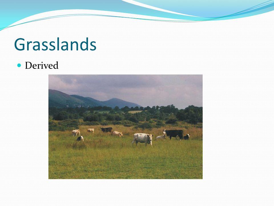 Grasslands Derived