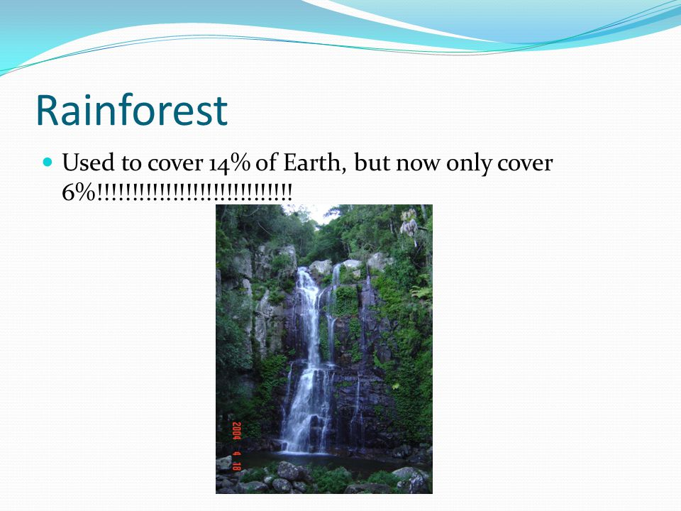 Rainforest Used to cover 14% of Earth, but now only cover 6%!!!!!!!!!!!!!!!!!!!!!!!!!!!!!
