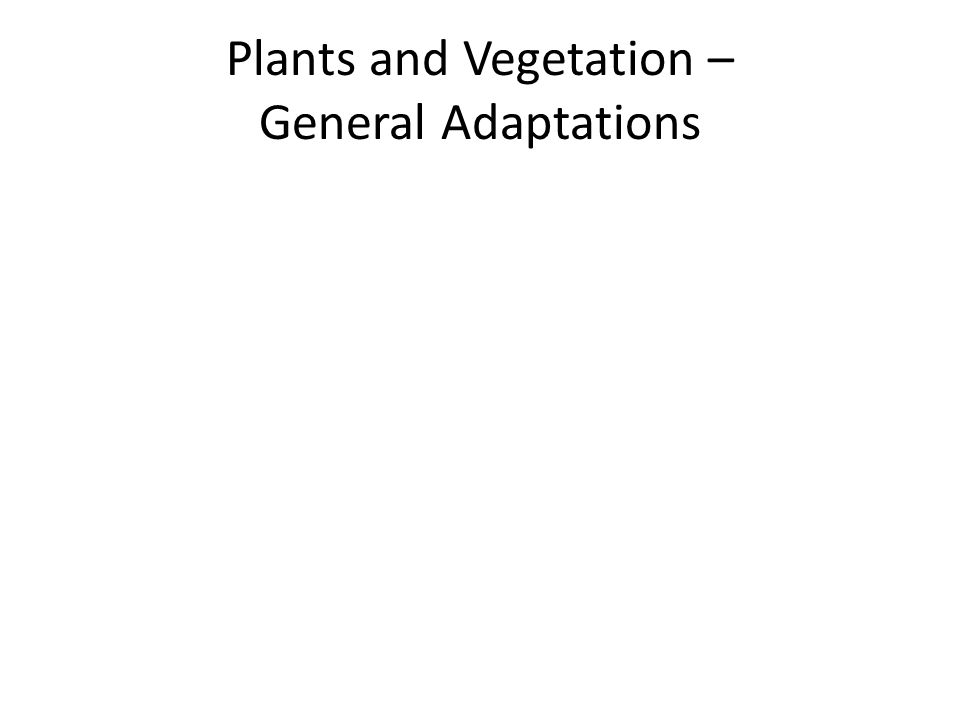 Plants and Vegetation – General Adaptations