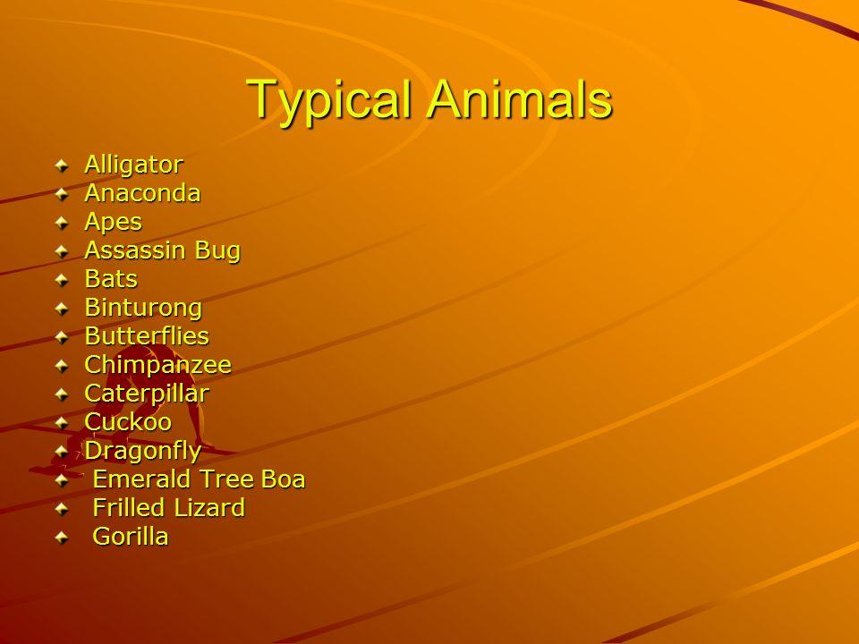 Typical Animals AlligatorAnacondaApes Assassin Bug BatsBinturongButterfliesChimpanzeeCaterpillarCuckooDragonfly Emerald Tree Boa Emerald Tree Boa Frilled Lizard Frilled Lizard Gorilla Gorilla
