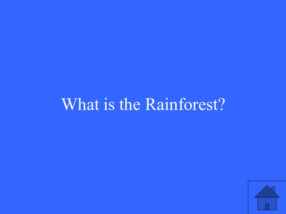 17 What is the Rainforest?