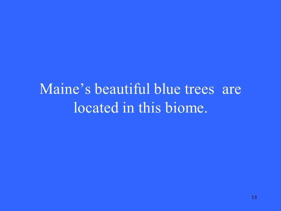 18 Maine's beautiful blue trees are located in this biome.