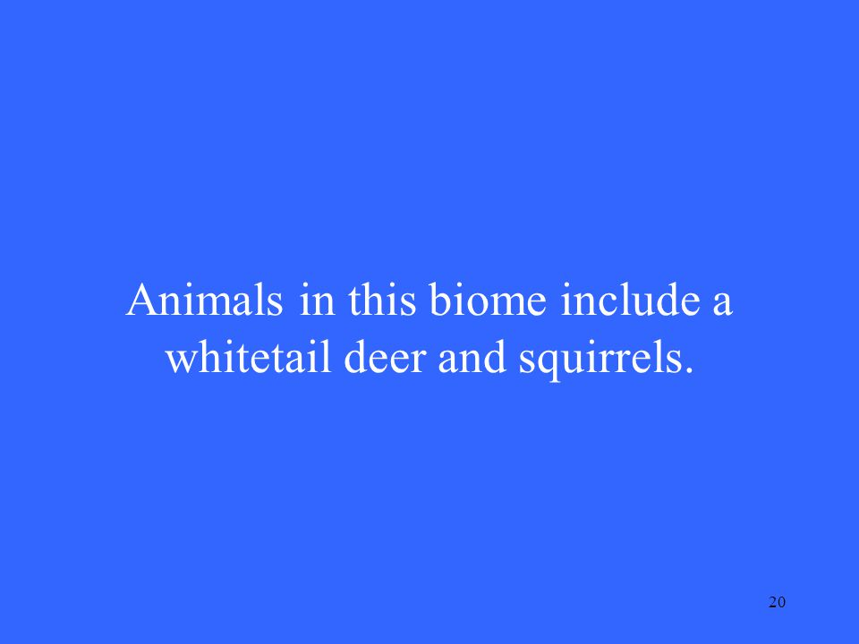 20 Animals in this biome include a whitetail deer and squirrels.