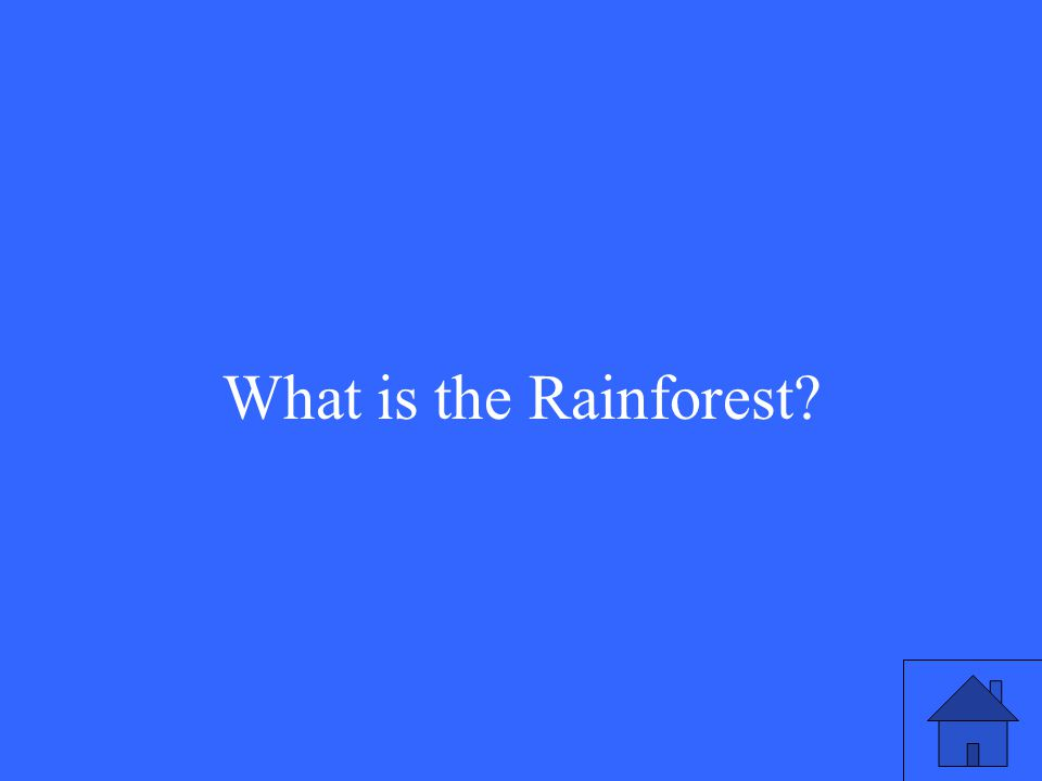 25 What is the Rainforest