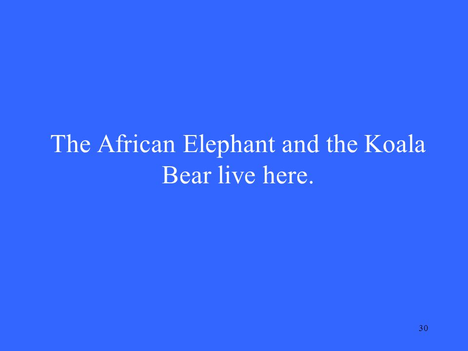 30 The African Elephant and the Koala Bear live here.