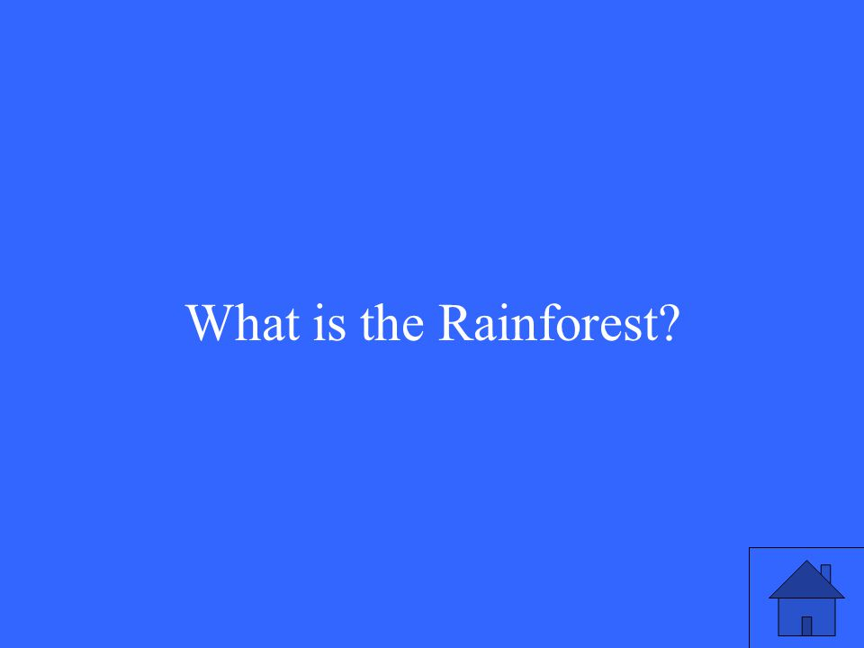33 What is the Rainforest?
