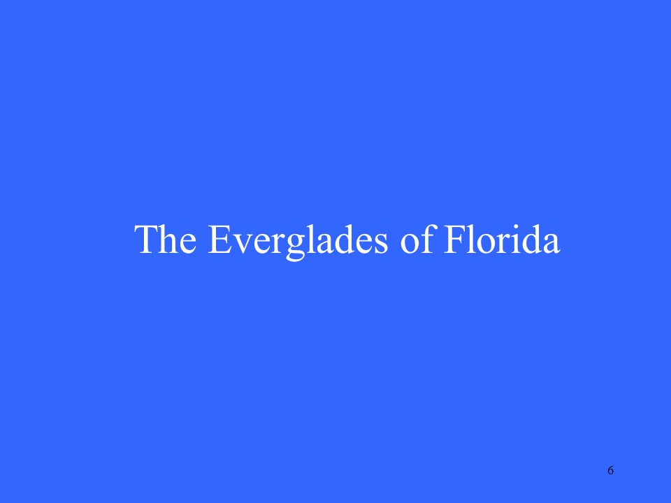 6 The Everglades of Florida