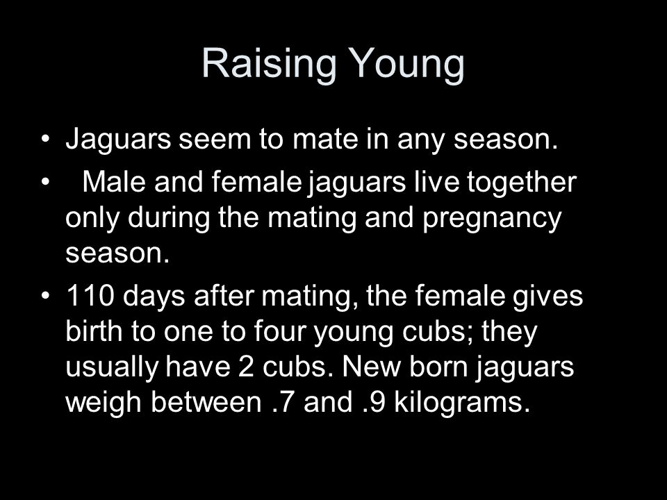 Jaguars seem to mate in any season.