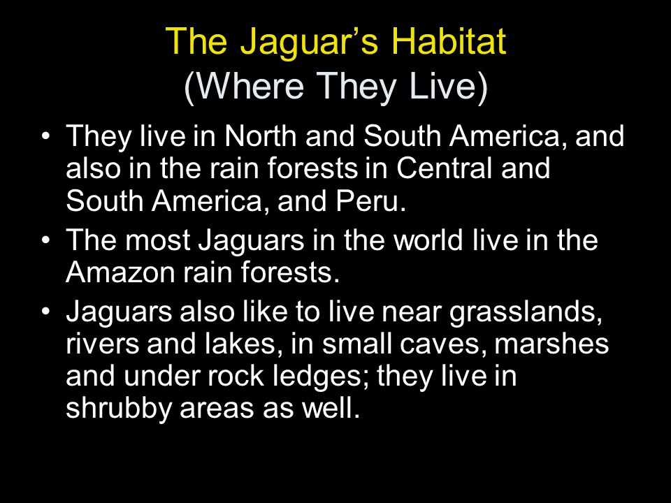 The Jaguar's Habitat (Where They Live) They live in North and South America, and also in the rain forests in Central and South America, and Peru.