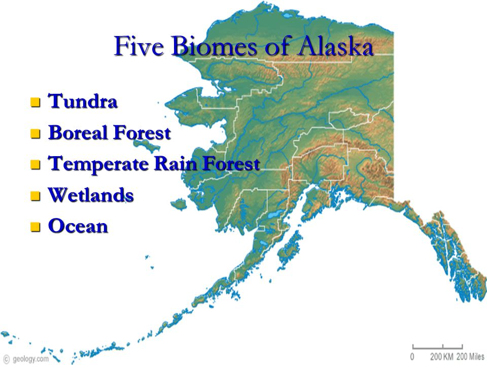 Five Biomes of Alaska Tundra Tundra Boreal Forest Boreal Forest Temperate Rain Forest Temperate Rain Forest Wetlands Wetlands Ocean Ocean