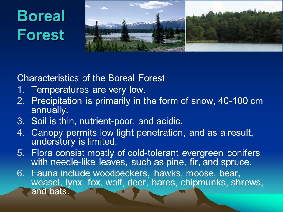 Boreal Forest Characteristics of the Boreal Forest 1.Temperatures are very low.
