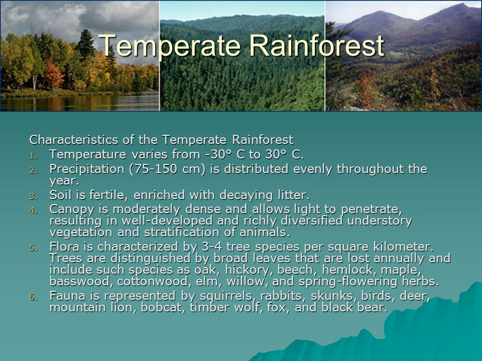 Temperate Rainforest Characteristics of the Temperate Rainforest 1.