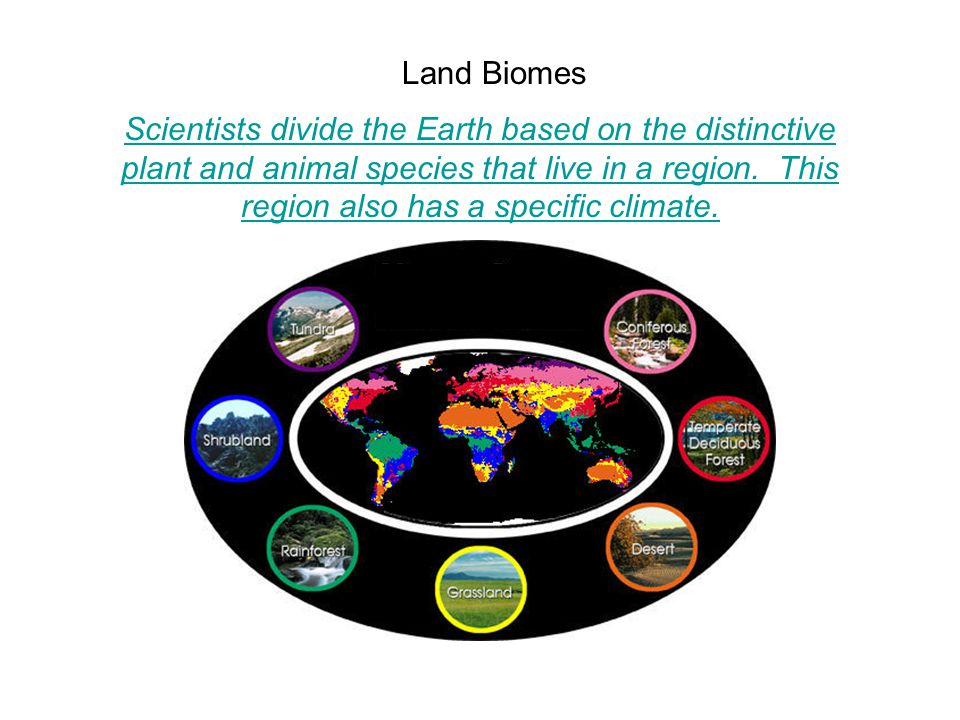 Land Biomes Scientists divide the Earth based on the distinctive plant and animal species that live in a region.