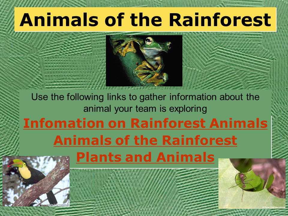 Rainforest Explorers  If you were an wildlife explorer where do you think you might look for animals like the ones we have been discussing.