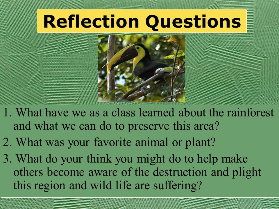 Animals of the Rainforest Infomation on Rainforest Animals Animals of the Rainforest Plants and Animals Infomation on Rainforest Animals Animals of the Rainforest Plants and Animals Use the following links to gather information about the animal your team is exploring