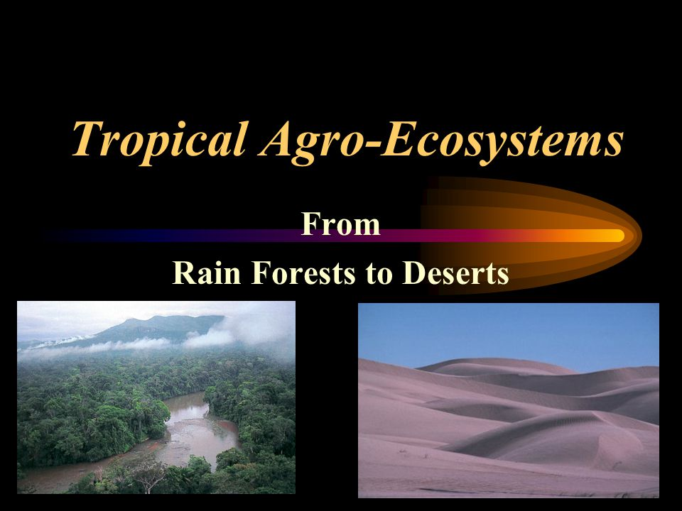 Tropical Horticulture - Texas A&M University Agriculture Potential of Forests Good Potential Moisture –Good quantity and well distributed Soil –Rain forest soils have poor fertility –Seasonal forests have better fertility than rain forests –Usually well drained Elevation –Cooler so slower growth –Lower yields than lowland regions Crops –Perennial: oil palm, cacao, coconut, banana, coffee –Annuals: cassava, yams, sweet potatoes
