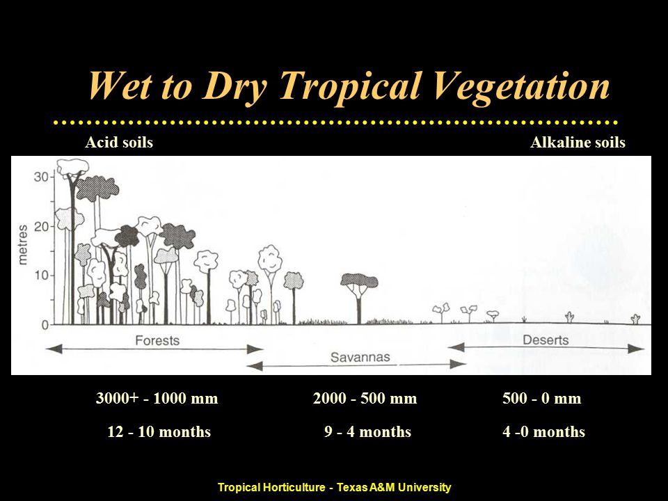 Tropical Horticulture - Texas A&M University Dry Savanna Bushland Savanna Monsoon, one long rainy season –750-1500 mm –Extensive areas of Asia and Africa –Highly variable climate and production Crops –Perennial Only drought tolerant - sisal, cashew In wetter areas, tea important –Groundnuts, cotton, sorghum, millet, maize –Rice when irrigated –Rangelands limited by dry season Rainfed and irrigated agriculture