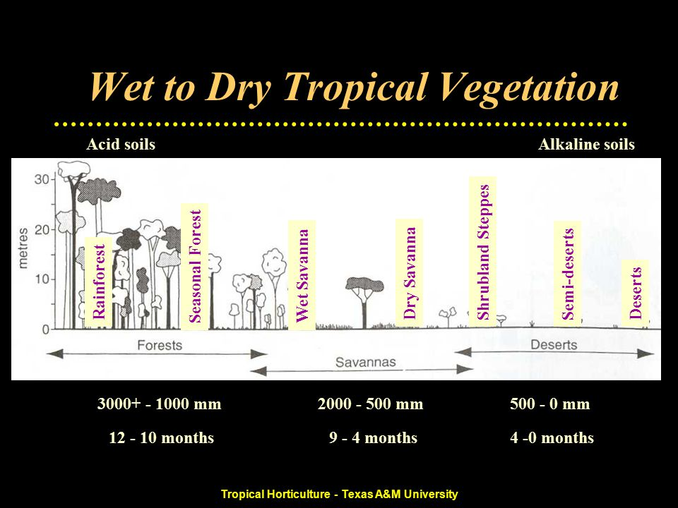 Tropical Horticulture - Texas A&M University Wet to Dry Tropical Vegetation 500 - 0 mm2000 - 500 mm3000+ - 1000 mm 4 -0 months9 - 4 months12 - 10 months Alkaline soilsAcid soils Rainforest Seasonal ForestWet Savanna Dry SavannaShrubland SteppesSemi-desertsDeserts