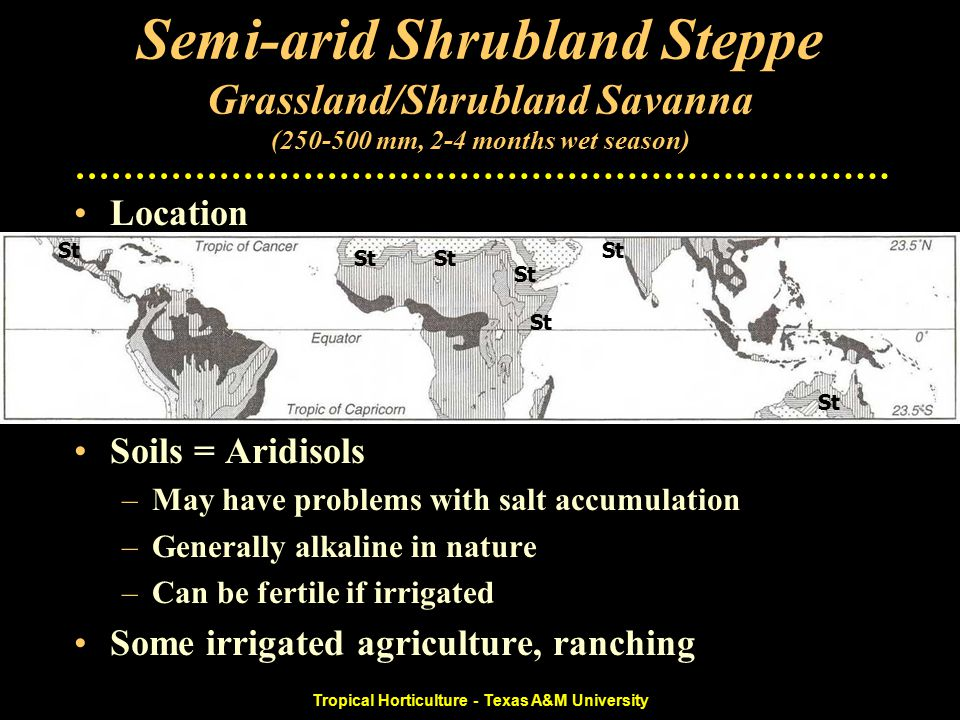 Tropical Horticulture - Texas A&M University Semi-arid Shrubland Steppe Grassland/Shrubland Savanna (250-500 mm, 2-4 months wet season) Location –Southern border of Sahara desert, west India –Southern Mexico –Australia –2 - 4 humid months, 250-500 mm Soils = Aridisols –May have problems with salt accumulation –Generally alkaline in nature –Can be fertile if irrigated Some irrigated agriculture, ranching St