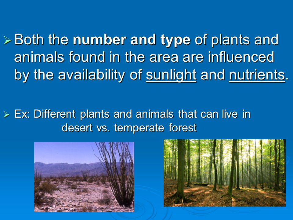  Both the number and type of plants and animals found in the area are influenced by the availability of sunlight and nutrients.