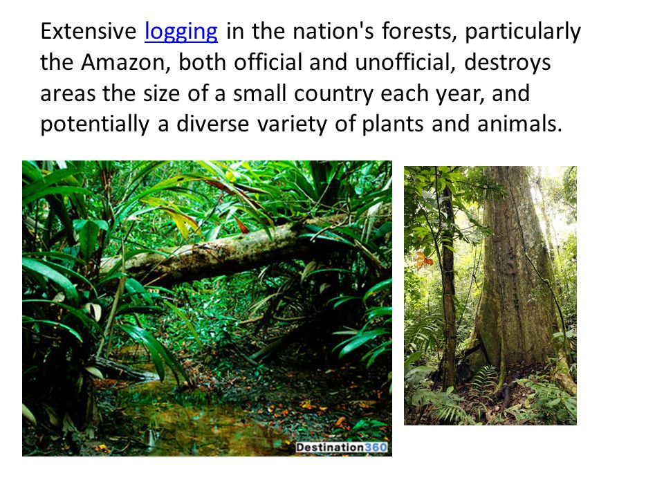 Extensive logging in the nation's forests, particularly the Amazon, both official and unofficial, destroys areas the size of a small country each year